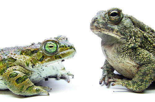 Two Frogs - Financial Aid Award Comparison